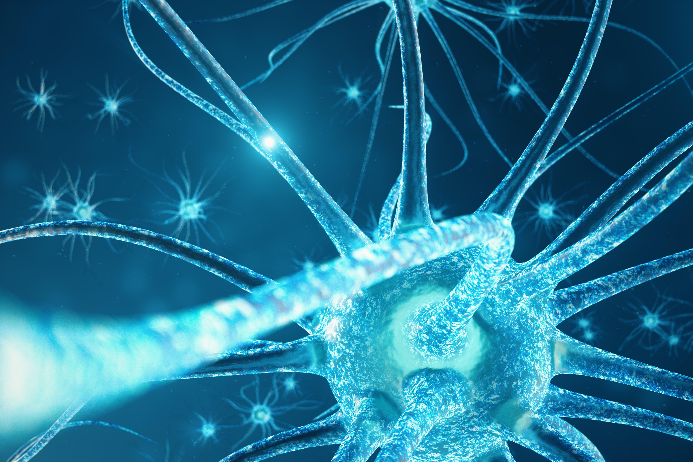 периферна нервна система